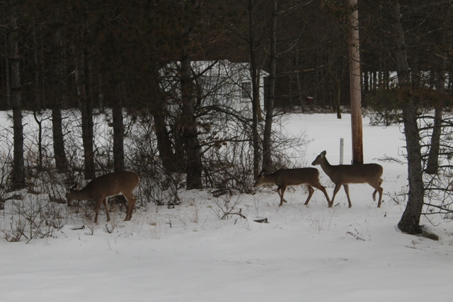 In The Sticks Cabins Winter Deer